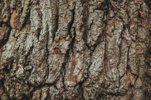 wood-tree-bark-english-oak-large